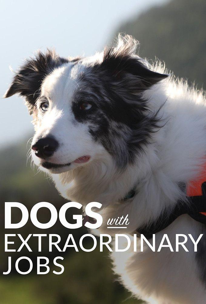 Удивительные профессии собак / Dogs with Extraordinary Jobs / 2019
